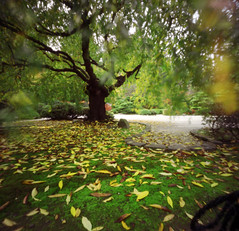 Japanese Gardens, pinhole (Zeb Andrews) Tags: urban usa color film leaves oregon garden square portland landscape pinhole pacificnorthwest zero2000 japanesegardens zeroimage zero66 bluemooncamera zebandrews zebandrewsphotography