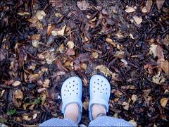 dead leaves and rain (faster panda kill kill) Tags: rain weird deadleaves quietness rubbershoes standinginyouryardinpajamas