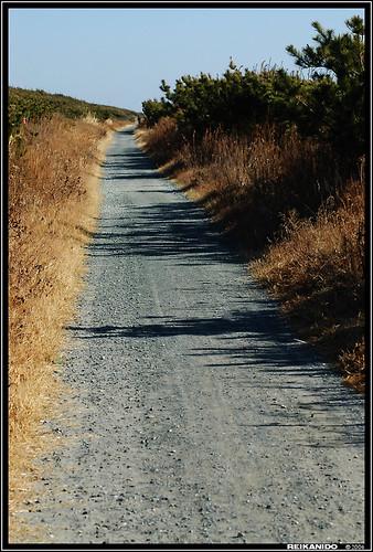 camino sobre las dunas junto a la mar océana