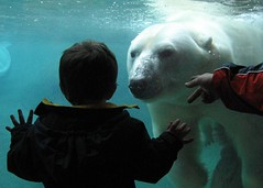 Want to play? (WAM86) Tags: animals canon matt children zoo underwater rochester polarbear a80 exploration senecaparkzoo
