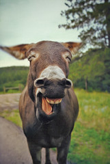 Laughing Donkey (jaxxon) Tags: friends silly face goofy animal animals tongue composition laughing canon mouth mammal nose happy crazy interesting friend funny fav50 teeth nuts donkey whiskers laugh mostinteresting personalfavorite g6 nutty mammals wacky chin myfave mule muzzle nostrils furryfriends powershotg6 furryfriend personalfave canonpowershotg6 permagrin quadruped quadrupeds fav25 fav250 fav100 fav200 fav300 magicdonkey jaxxon jackcarson fav150 specanimal animalkingdomelite abigfave laughingdonkey omot fav75 impressedbeauty lmaoanimalphotoaward fav125 fav175 fav400 jacksoncarson jacksondcarson quadupeds fav350 fav225 fav275 fav325 fav375