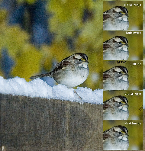 5-Way Noise Reduction Test II: Watch the Birdy