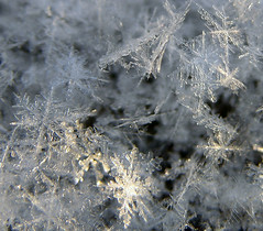 I Am Small (Bubba Trout) Tags: snow macro tag3 taggedout snowflakes interestingness tag2 tag1 allrightsreserved i500 allrightsreserved interestingness1500 3wc 3wcmacro