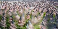 Military Heroes Garden of Flags (tanyamaxham) Tags: usa boston flags americanflags bostonma bostoncommon militaryheroes gardenofflags
