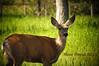 It's Bambi! (Niño David) Tags: canada wildlife deer alberta bleh albertacanada waterton watertonlake albertawildlife