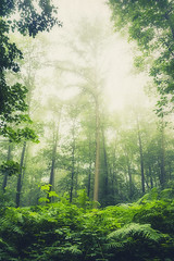 hazy summer forest (Dyrk.Wyst) Tags: trees light summer blur fern nature leaves vertical fog backlight forest sunrise landscape outdoors licht buchenwald haze mood nebel sommer branches fineart laub natur noone atmosphere dreamy lush wuppertal landschaft wald bume bergischesland atmosphre farn impressionistic stimmung gegenlicht dunst waldweg bsche creativephotography ppig photoshelter mirkerhain
