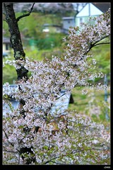 nEO_IMG_DP1U3767 (c0466art) Tags: park old trip travel flowers light green castle pool beautiful japan canon season spring scenery afternoon bloom sakura 2015 trres 1dx c0466art