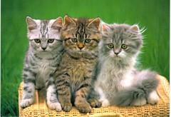 3 Cats (booboo_babies) Tags: cats cute czechrepublic postcrossing