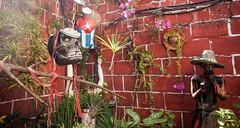 Cuba - La Habana (Cyrielle Beaubois) Tags: 2016 cuba cyriellebeaubois décembre lahabana lahavane streets canoneos5dmarkii callejóndehamel