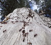 Ants sky (photograph-painter) Tags: ants sky ameisen himmel stamm holz richtung baum borke ast ameise