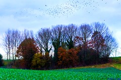 The birds (Fleur Du Chat) Tags: oiseaux arbres trees birds nature