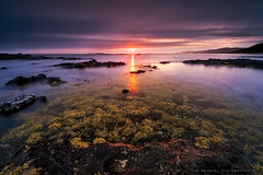 Sunset on the reef (Rob Reaburn Photography) Tags: sunset lowtide reef rock beach ocean sea intertidal homosirabanksii neptunesnecklace brownalgae seaweed summer flinders victoria australia