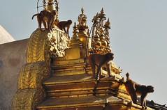 "NEPAL, Kathmandu,  Stupa von Swayambhunath, 15142/7829 (roba66) Tags: affe primate baboon monkey ape apes monkys affen tiere animals reisen travel explore voyages urlaub visit roba66 nepal asien südasien asia city stadt capitol kathmandubefore earthquake ""stupa von swayambhunath"" stupa swayambhunath tempel tempelanlage building architektur architecture arquitetura kulturdenkmal monument bau fassade façade platz places historie history historic historical geschichte urban"