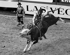 024693632-83-2016 NFR Bull Riding Cowboy-2-Black and White (Jim There's things half in shadow and in light) Tags: canon5dmarkiv canon70200lens lasvegas nfr nationalfinals nevada rodeo southwest thomasandmack unlv country cowboy sports blackandwhite bullriding roughstock bucking