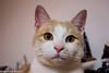 Ettore (ventus85) Tags: gatto micio animale ettore