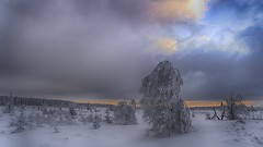 Hautes Fagnes - Coucher de soleil (Alta Alteo) Tags: hohes venn hautesfagnes winter schnee frost raureif moor begien hochmoor birke sonnenuntergang kalt winterlandschaft landscape travel reisefotografie baraquemichel jalhay verviers
