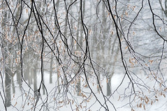 ...I wonder if the snow loves the trees and fields, that it kisses them so gently..... (eggii) Tags: winter snow cold park morning walk time mood light white trees mist fog