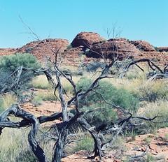 AUSTRALIA KINGS CANYON (patrick555666751) Tags: australia kings canyon australie oceanie flickr heart group mountain montagne muntanya australiakingscanyon territoire du nord northern territory red center centre rouge
