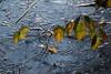 Winter lake (V) (dididumm) Tags: sunshine reflections leaf leaves branch winter snow ice lake frozen sonnenschein gefroren see eis schnee ast blätter blatt spiegelung