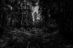 DR150805_194D (dmitry_ryzhkov) Tags: black blackandwhite bw monochrome white bnw blacknwhite art europe light lights shadow shadows live photo photography shot sony alpha wild wildlife life moment shots nature naturephoto naturephotography natureshot photograph flower flowers flora plant plants botany leaf leaves tree landscape landscapes sky outdoor outdoors wood forest trees moscowskaya oblast moscow russia