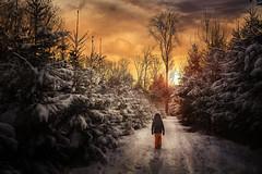 January (Chrisnaton) Tags: winter winterforest winterscape winterwalk sundown sunset eveningmood eveninglight eveningcolors walking snowsuit forest outdoor winterwald journey fireandice switzerland