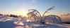 (coco_cn) Tags: mummelsee winter germany schwarzwald blackforest sunnset tree white snow wandern winterzauber entspannung winterliche ausflug fuji xt1 zeiss 12mm