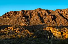 "Saguaro ""forest"" (docoverachiever) Tags: rocks blue sunset scenery desert landscape nature tucsonmountainpark mountains redrocks arizona saguaro cacti orange tucson arizonapassages"