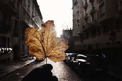 Leaf (abdalmajeedTM) Tags: leaf fall falling old sun sunset sunny paris france french lonely alone gloves street road car cars nature tree flower flowers sunrise photography nikon d7100 lens trip vacation summer winter black professional pro orange wallpaper photographer شمس ورقة شجر خريف شتاء طريق طرق شروق غروب نيكون تصويري احترافي