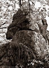 DSC_9119_v2 (Pascal Rey Photographies) Tags: mégalithes megaliths lemenhirduflat lepilat colombier saintjulienmolinmolette loire42 nature paysages paysage landschaft lanscapes rochers oldstones vieillespierres outside outdoor noirblanc blackwhite blancoynegro stones campagne countryside automne autumn ballade randonnée forêt forest france piedrasantiguas piedras digikam digikamusers linux ubuntu opensource freesoftware