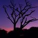 Tarangire Landscapes