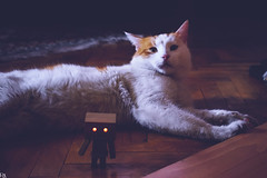 Danbo & cat 3 @ danbo/данбо (Robert Krstevski) Tags: robertkrstevskiblogspotcom robertkrstevski photography photooftheday photograph photo photographer cat cats pet pets animal animals animallovers animalslove catsphotography catlovers catsedition gatos gato котка кошки кошка kotka животни животно danbo danboard danbomacedonia danbostory danboamazon danborou popular nikond3300 nikon cute
