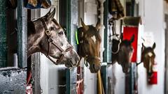 Lxngtn_2928-2.jpg (C.Fredrickson Photography) Tags: horses kentucky ky jockey horseracing thoroughbred 2014 carlfredrickson wwwcfredricksonphotographycom carlfredrickson2014 keenelandraceway