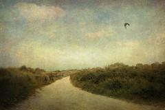 Le chemin des dunes (Daniel Schoumakers) Tags: mer texture landscape dunes sable paysage textured mouette lecrotoy memoriesbook danielschoumakers