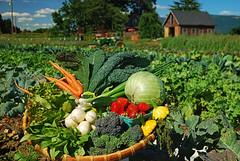 spring harvest (heinrick oldhauser) Tags: vegetables field fruit oregon coburg harvest lanecounty camasswalefarm