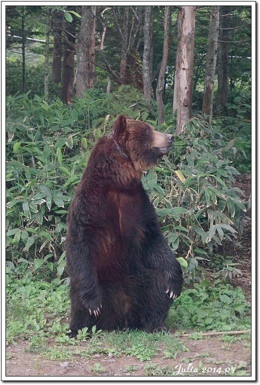 熊牧場 (8)