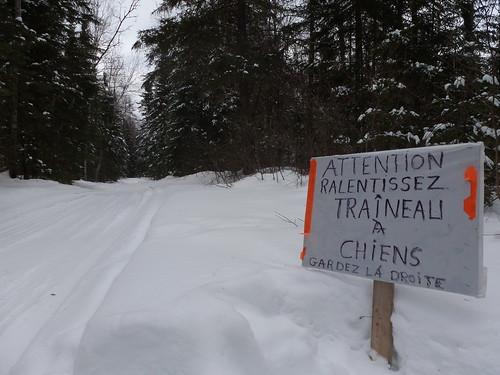 Attention aux traîneaux! Québec