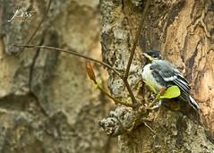 "Homeless and vulnerable (Joybroto Dass) Tags: forest woods fauna nature wild canon wildlife photography animal bird beautiful amazing india raw beauty avian camera click rawnature""""wildphotography natureatitsbest"