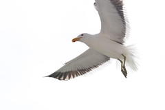 02. Air | The August Break 2015 (fraeuleinfamos) Tags: sea seagulls birds coast flying seaside meer seagull air atlantic soaring vgel mwe namibia oben mwen kste atlantik fliegen walvisbay mven mve flug molamola upintheair ammeer inderluft vogelflug sdatlantik augustbreak2015