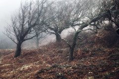 An upwards battle (SimonMastersPhotography) Tags: trees mist uk leaning bent stooped winter bare broken decay cold fog