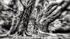 Desfocado - Parque Ibirapuera (Marcos Simanovic) Tags: black blackandwhite monocromático parquedoibirapuera ibirapuera parqueibirapuera simanovic tree desfocada
