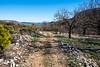 Almendros (Juandalfweb) Tags: fujifilm fujifilmx fuji fujifilmxt1 xf1855f284 alicante benifato mediterraneo mediterranean mountain almond almendros alacant españa