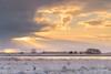Goede morgen Dwingelderveld (Pieter ( PPoot )) Tags: npdwingelderveld winter zonsopkomst sneeuwbui davidsplassen