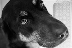 Kitty (andaradagio) Tags: dog cane andaradagio bianconero miglioramicodelluomo canon