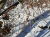 Kleiner blauer Diamant..... (Ina Hain) Tags: fz1000 bridgekamera panasonicfz1000 jagd äste baum frost outdoor sun water wasser sonne schnee winter fluss mangfall vögel birds bird bavaria bayern kingfisher eisvogel