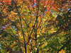 FullSizeRender (51) (sswartz) Tags: michigan fall autumn nature autumnleaves leaves leaf trees forest woods