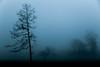 "say when (listening to ""truth"", balmorhea) (jeneksmith) Tags: canon trees fog dawn foggy mist lucid mysterious dark nature natural blue monochrome tree haze hazy landscape"