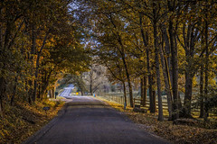 Old Covered Bridge Lane In Late October (myoldpostcards) Tags: rural country landscape hills colors orange yellow trees oldcoveredbridge lane ln sangamoncounty centralillinois illinois il unitedstates myoldpostcards randy randall vonliski season fall autumn oldcoveredbridgelaneinlateoctober goldenhour light glow shadows countryroads canon eos 7dmarkii