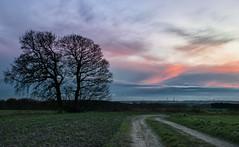 Blue Hour Skies (g a millington) Tags: billinge garswood sunset bluehour skies clouds cloudscape dusk duskskies twintrees trees lane path track