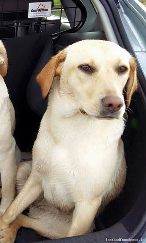 Fri, May 29th, 2015 Lost Female Dog - Dungiven, Bt47 4lw, Derry