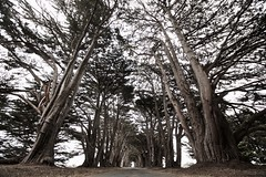 Cypress Tunnel (SkylerBrown) Tags: california travel trees nature forest landscape wide cypress pointreyes canopy